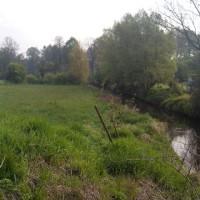náhradní výsadba Panenský potok